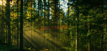 Grodziec, działka leśna  74 a